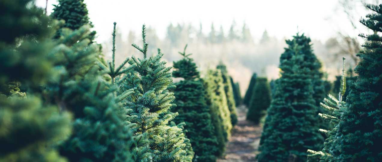 Buy Artificial Premium Christmas Trees size 1 to 20 feet ...
